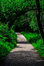 Camino de la Ruta da Senda do Lérez (Pontevedra).jpg