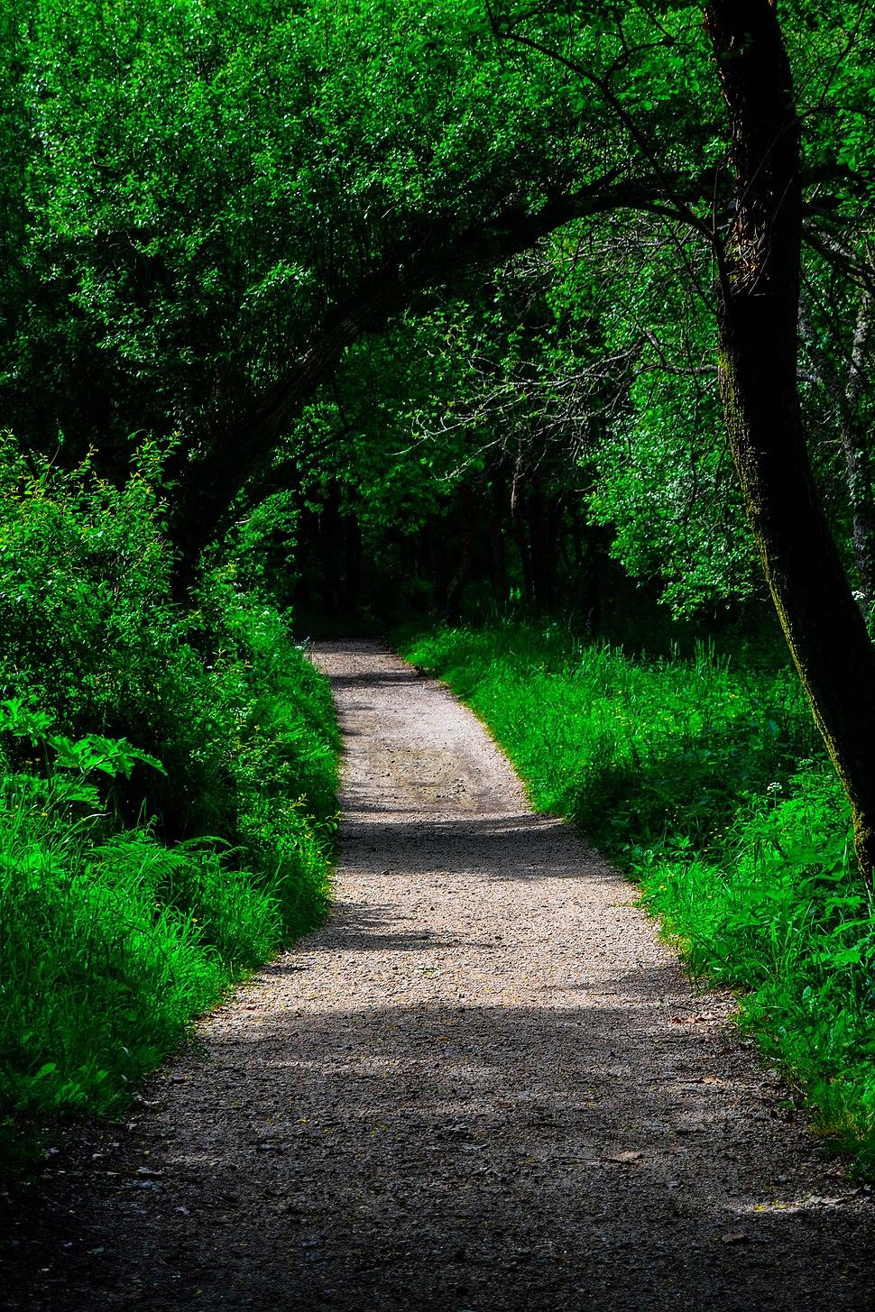 Camino de la Ruta da Senda do Lérez (Pontevedra)
