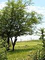 Camino verde NATURAL.JPG