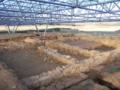 Campamento Romano da Cidadela.png