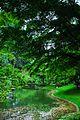 Canopy of Trees.jpg