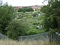 Cape Road allotments, Warwick - geograph.org.uk - 1400704.jpg