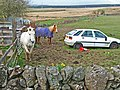 Car and horse - geograph.org.uk - 162954.jpg