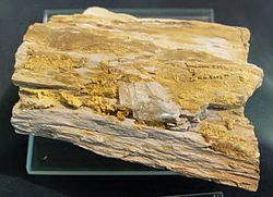 definition of carnotite