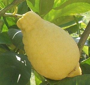 Lumia (citrus) - Image: Castello, collezione degli agrumi 02