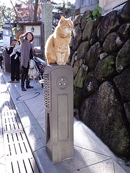 Cat sitting on a pillar (4799333746)