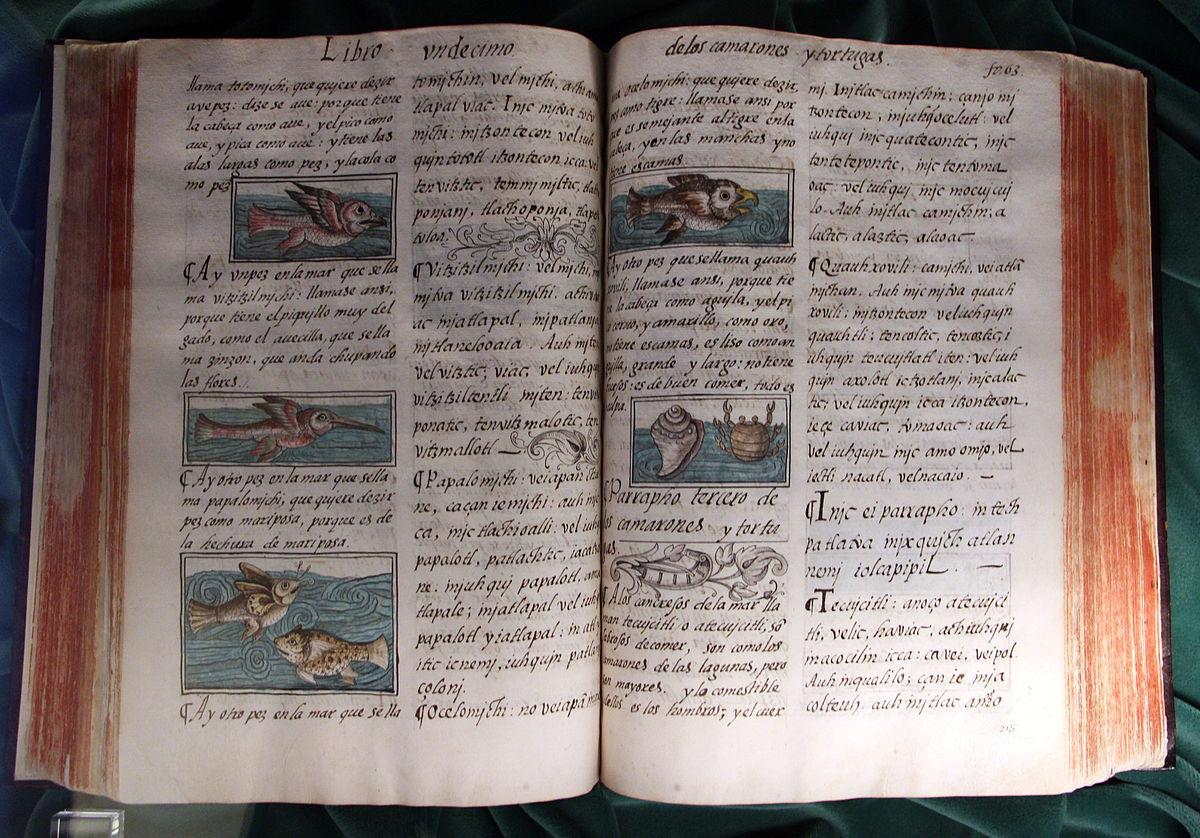 Codice fiorentino - Wikipedia