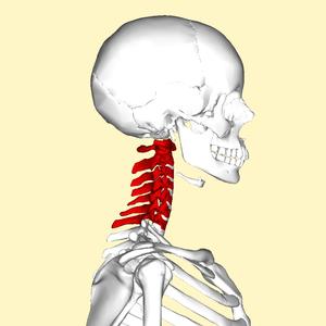 Cervicale wervels lateral.png