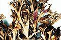 Cetraria arenaria-3.jpg