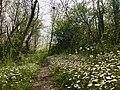 Chemin en fleurs sur les coteaux de Pamiers.jpg