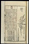 Chinese Materia medica, C17; Plant drugs, Caulis impatientis Wellcome L0039335.jpg