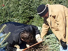 I need a tree farming article?