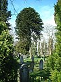 Churchyard, St James the Great - geograph.org.uk - 1227218.jpg