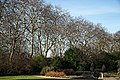 City of London Cemetery Memorial Gardens and trees on Limes Avenue.jpg