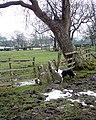 Clapper stile on the Boldron Well walk - geograph.org.uk - 1671202.jpg