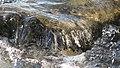 Cluj-Napoca - Someş river (2239248979).jpg