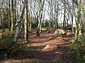 Colehill Trails - geograph.org.uk - 1604297.jpg