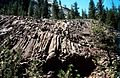 Columnar joints in a basalt plug Yosemite National Park.jpg