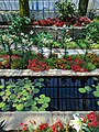 Como Park Zoo and Conservatory - 50.jpg