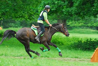 Jumping (horse) - Image: Complet cysoing cross 038