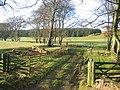 Contrasting woodland, Wester Deans. - geograph.org.uk - 91239.jpg