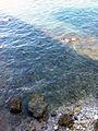 Costa di Trani dalla villa.jpg