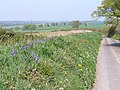 Country Lane East of Colemore - geograph.org.uk - 408124.jpg