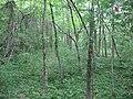 Cowan Creek Circular Enclosure.jpg