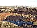 Cowhorse Hill - geograph.org.uk - 575371.jpg