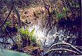 Cowles bog in the spring.jpg