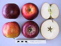 Cross section of Bohemia, National Fruit Collection (acc. 1999-007).jpg