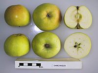 Cross section of Damjanich, National Fruit Collection (acc. 1948-361).jpg