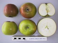 Cross section of Diamond Jubilee, National Fruit Collection (acc. 2000-029).jpg