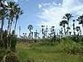Cruz - State of Ceará, Brazil - panoramio (2).jpg