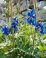 Cuneo flora.jpg