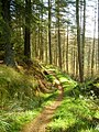 Cycle Trail in Newcastleton Forest - geograph.org.uk - 608642.jpg