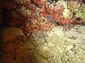 DSC00170 - recifes de coral - Naufrágio e recifes de coral no Nilo.jpg