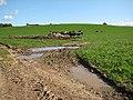 Dairy herd, Deerhurst - geograph.org.uk - 988688.jpg