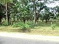Dambulla, Sri Lanka - panoramio (146).jpg
