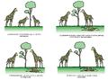 Darwinismoa jirafaren adibidea.png