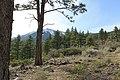 Davis Creek Park - panoramio (61).jpg