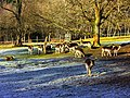 Deer, Just Not All Meaning John - panoramio.jpg