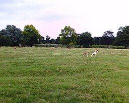 Deer Sanctuary, Normanby Hall