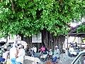 Der Ficus 1302 - panoramio.jpg