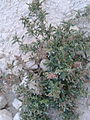 Desert plants voll 4 by irvin calicut (5).jpg
