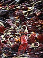 Detail of Chiles for Sale in Market - Oaxaca - Mexico (14938097723).jpg