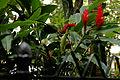Detalhe de jardim na Rua General Glicério.jpg