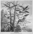 Die Gartenlaube (1872) b 057.jpg