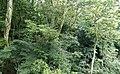 Dlinza Forest ... (45804257664).jpg