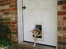 dog egressing through pet door in household front door